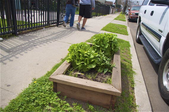 One of several boxes along 57th St. boasting healthy greens. Sahra Sulaiman/LA Streetsblog